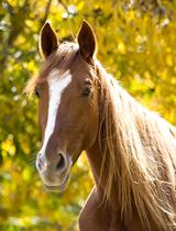 pferd goldiges licht
